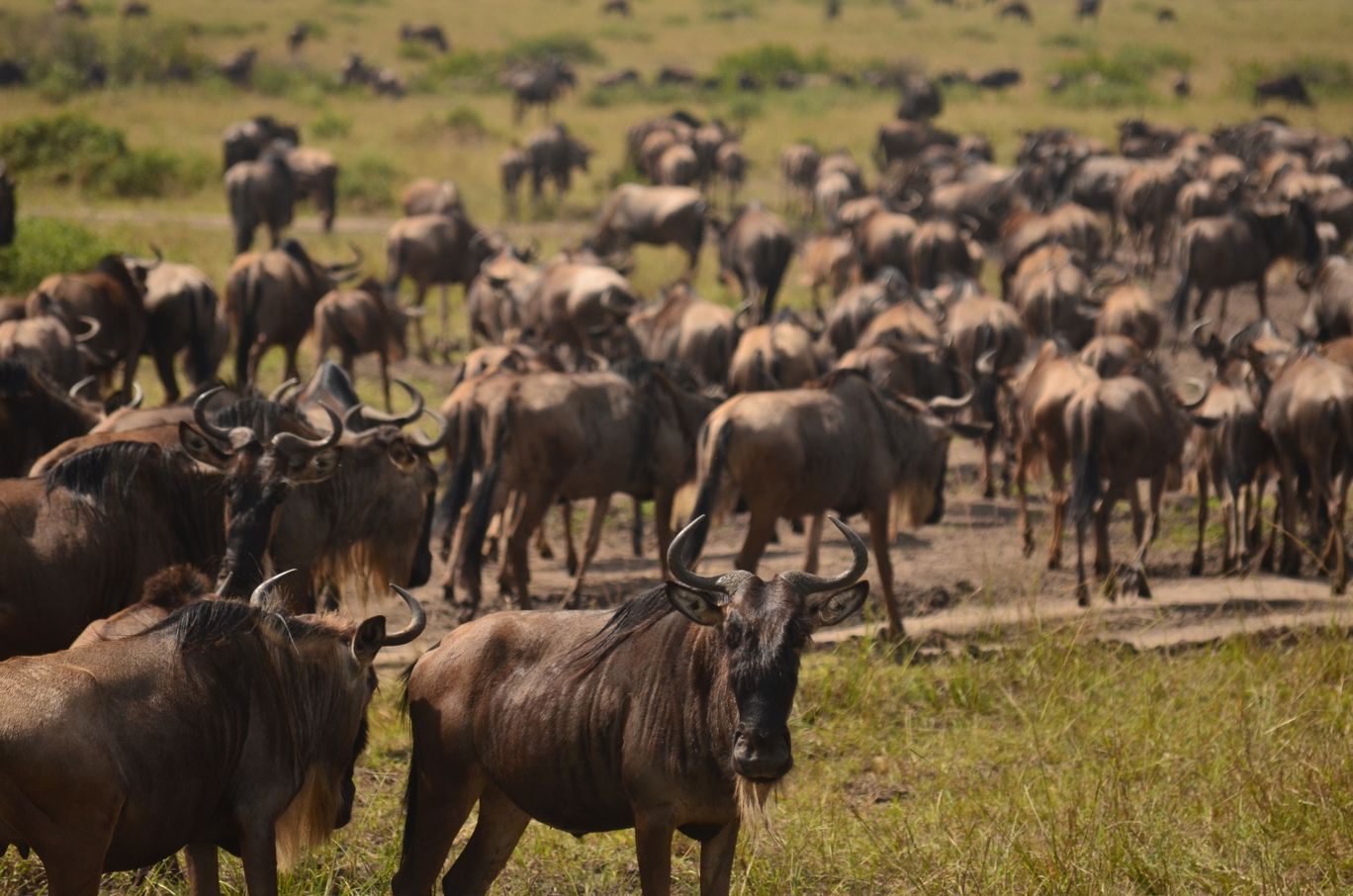 Photo of Masai Mara National Reserve By Kavya Srinivasan