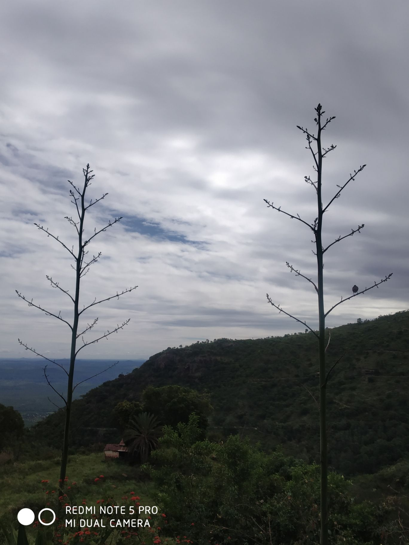 Photo of Ooty By Nandi Dhoni