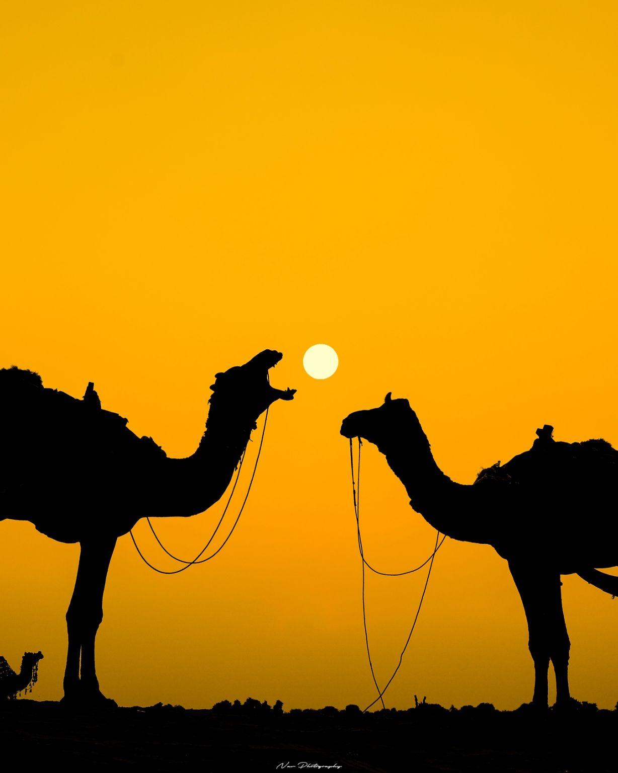 Photo of Pushkar By Navnidh Singh