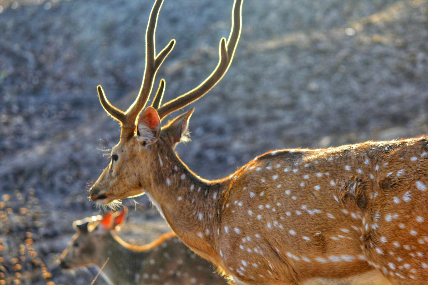 Photo of Bandipur National Park By Anil Kumar