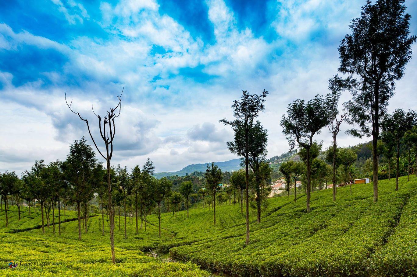 Photo of Making Of Tea Powder By Raghu Varun Dev Tanna
