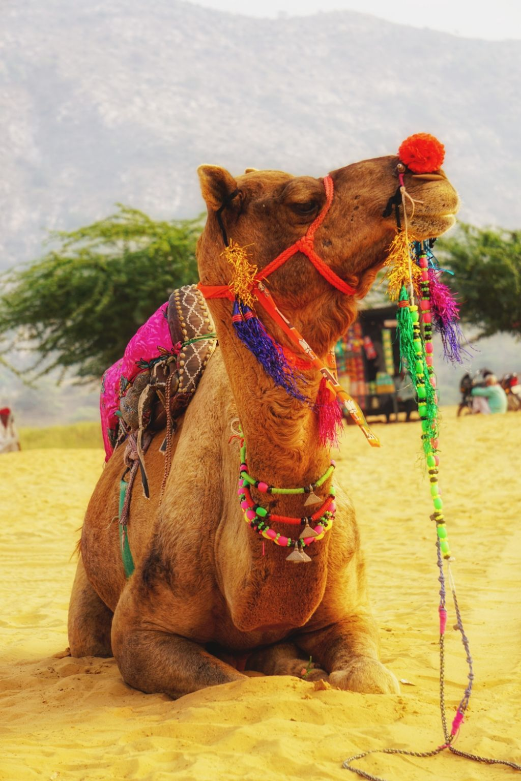 Photo of Pushkar By Vivek Bansode