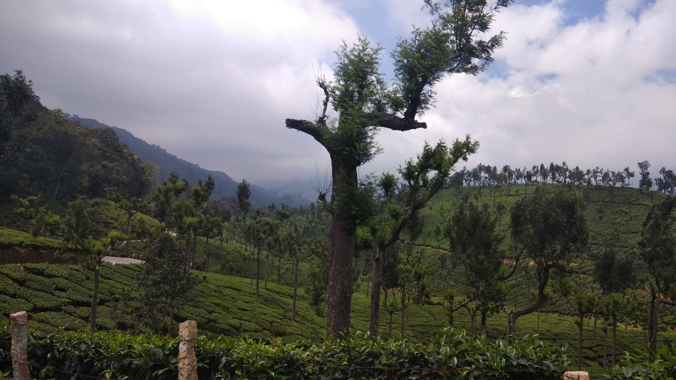 Photo of Amazing Trip To Kodaikanal-Munnar By Mohit Vishnoi