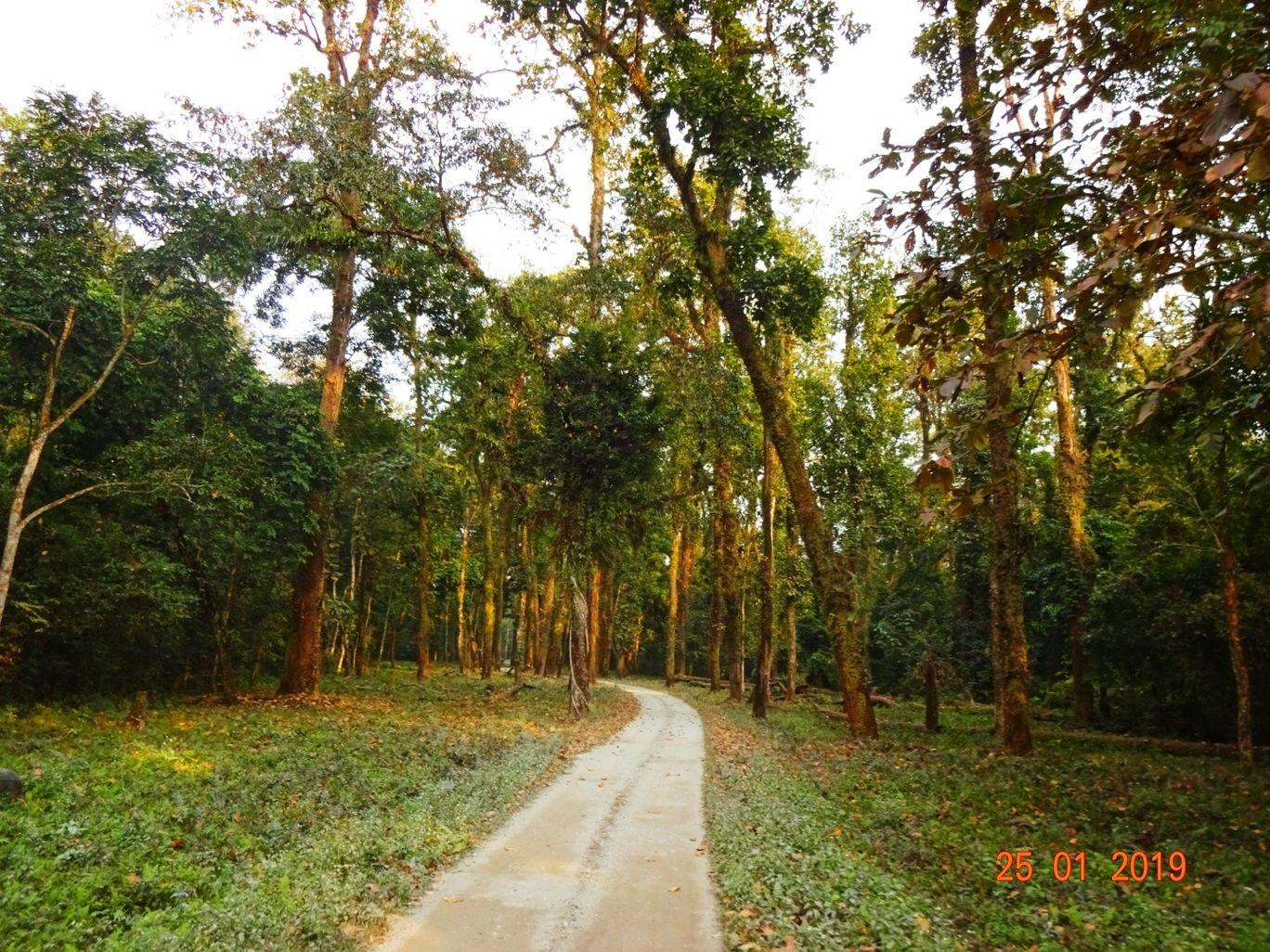 Photo of Gorumara National Park By Parikshit Das