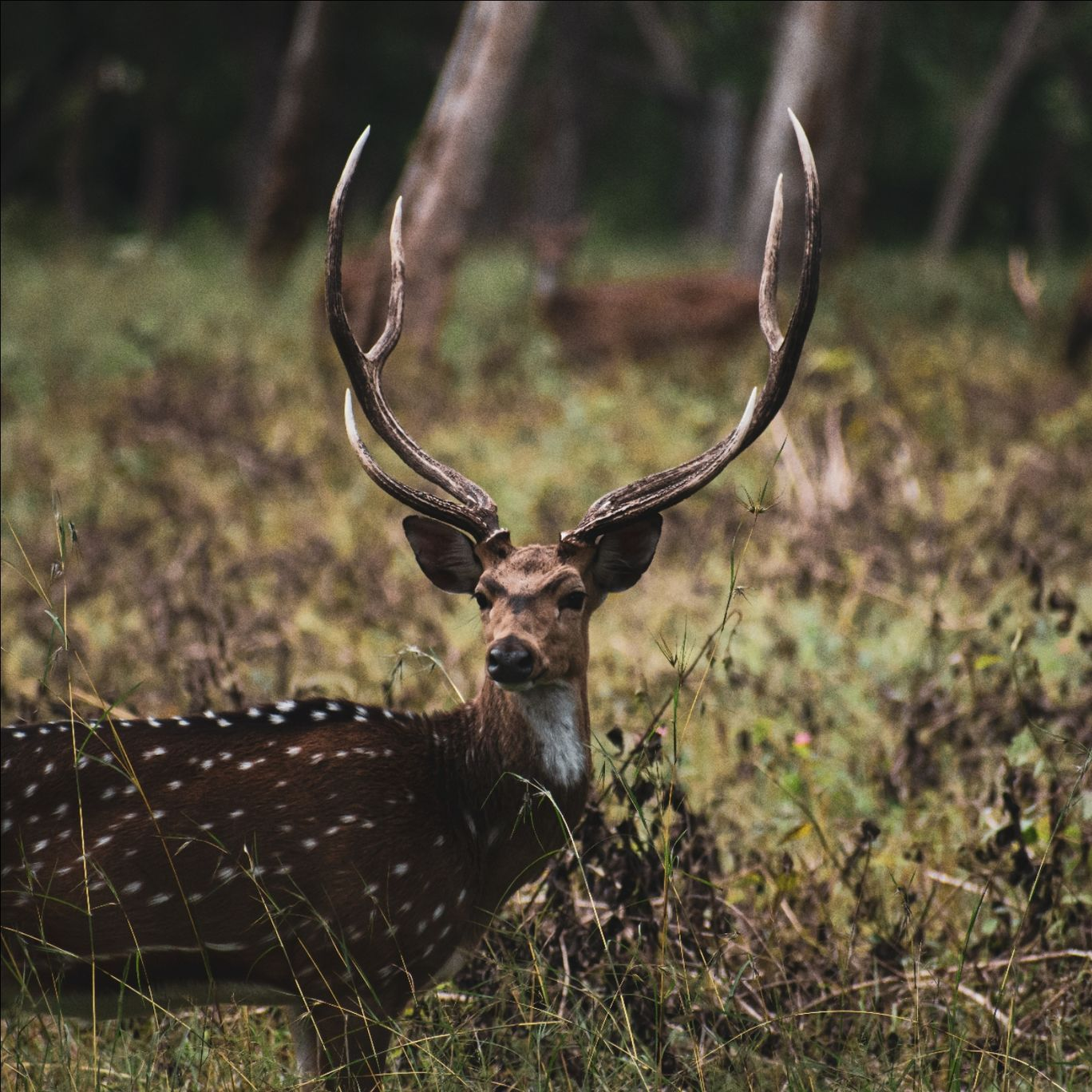 Photo of Bandipur National Park By Syed Ameen