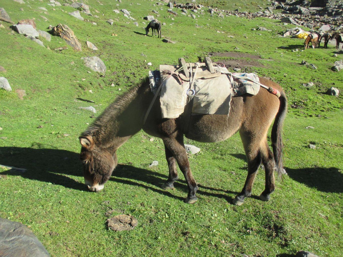Photo of Himalayas By Preeti pal