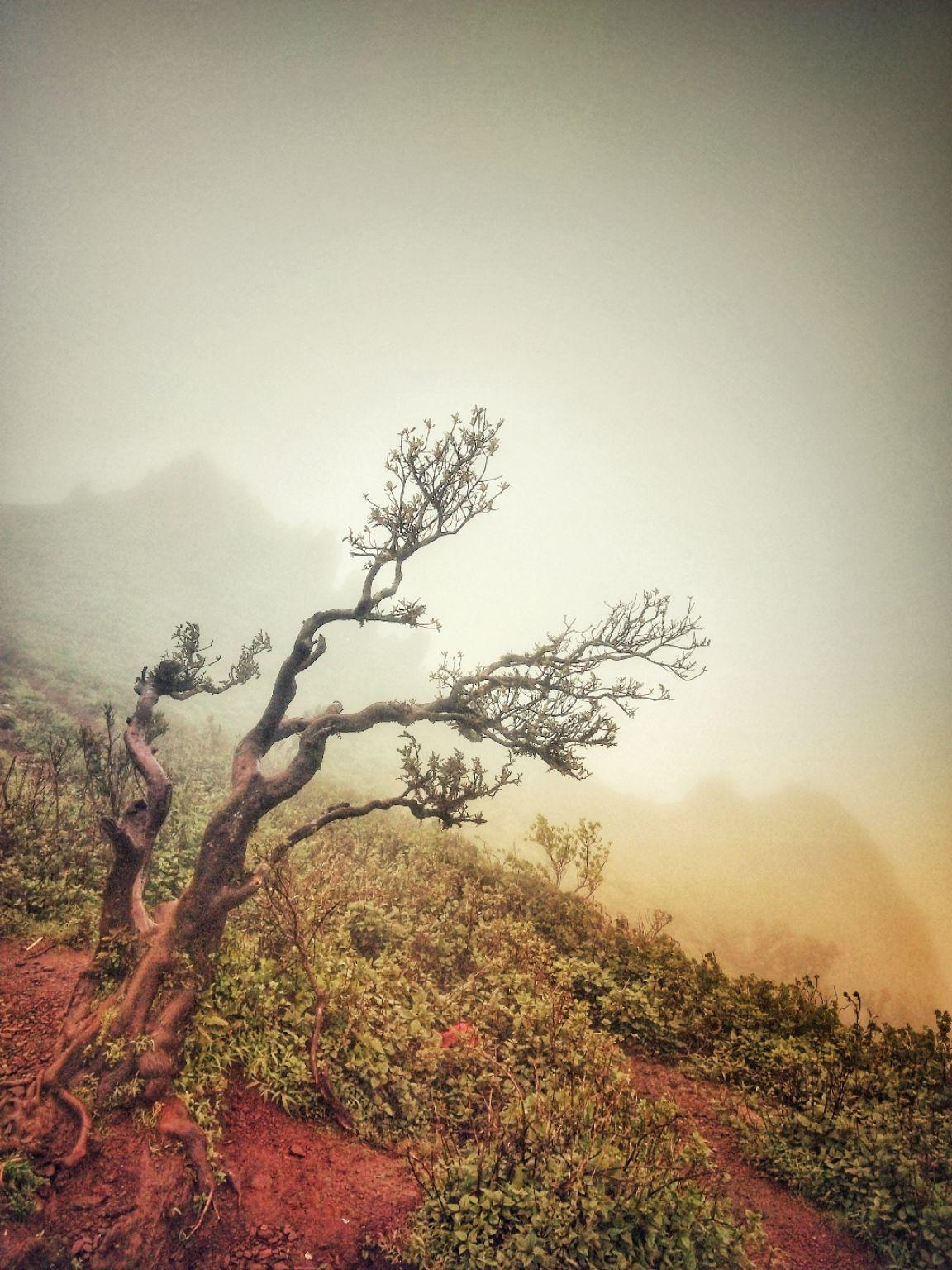 Photo of Chikmagalur By Varma Chandu