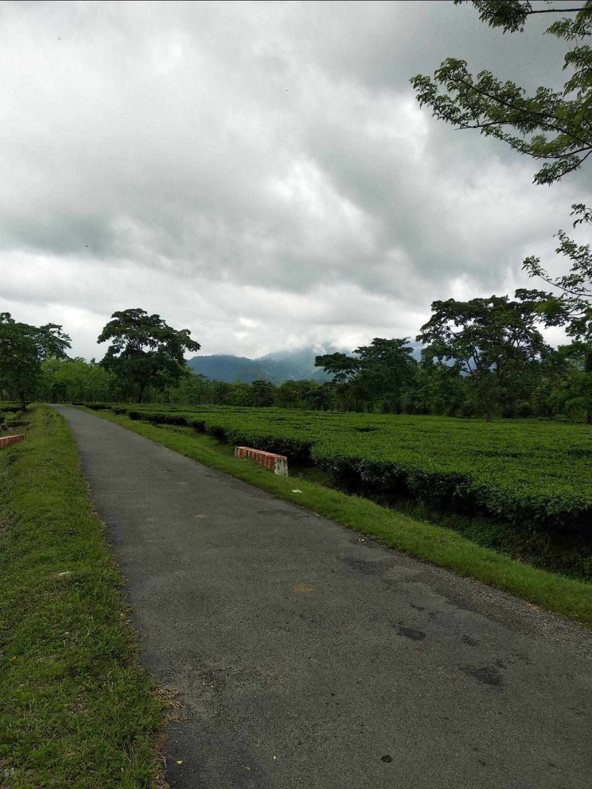 Photo of Raimatang Tea Estate By Yogesh Jain