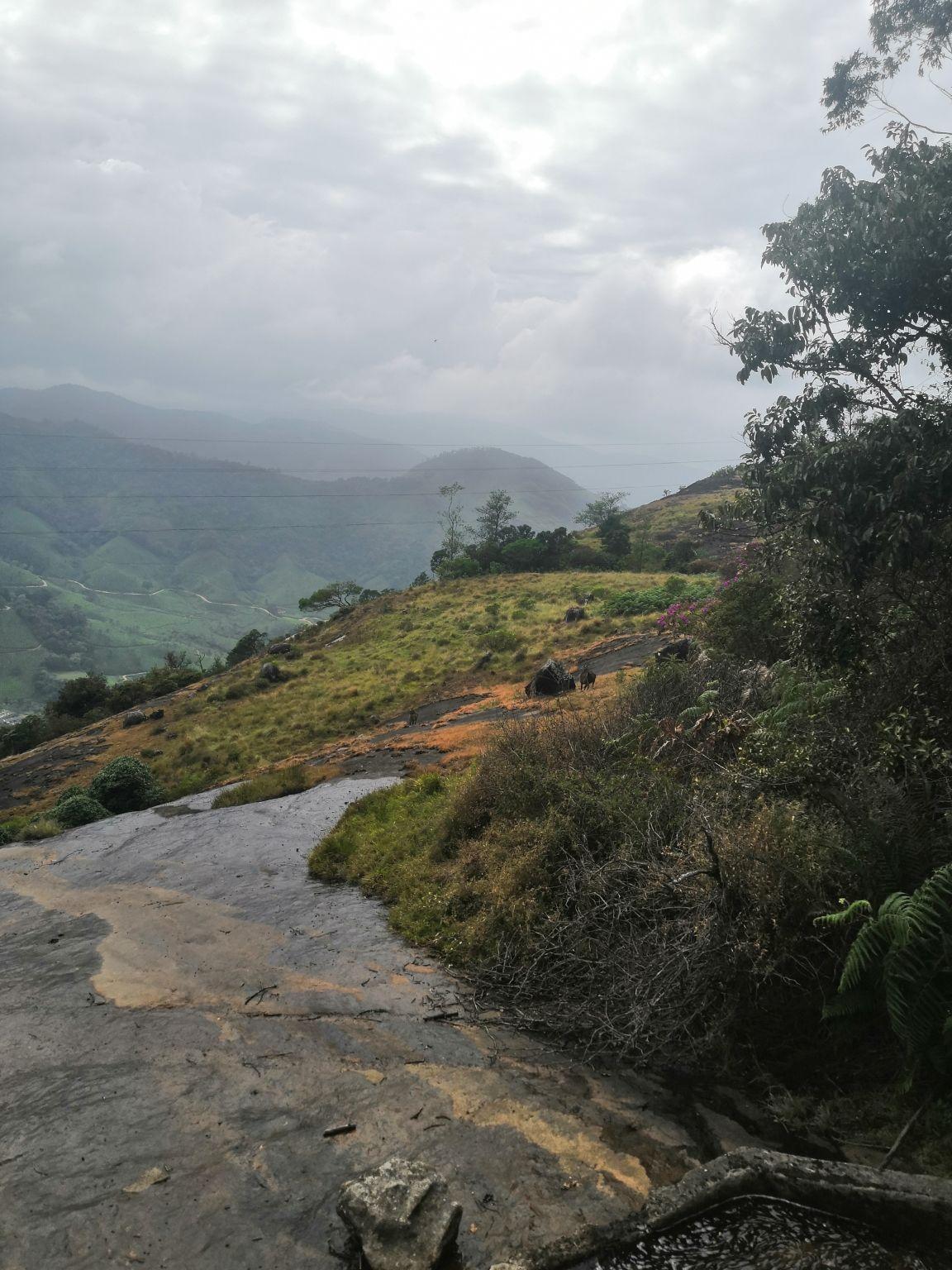 Photo of Eravikulam National Park By Fernweh