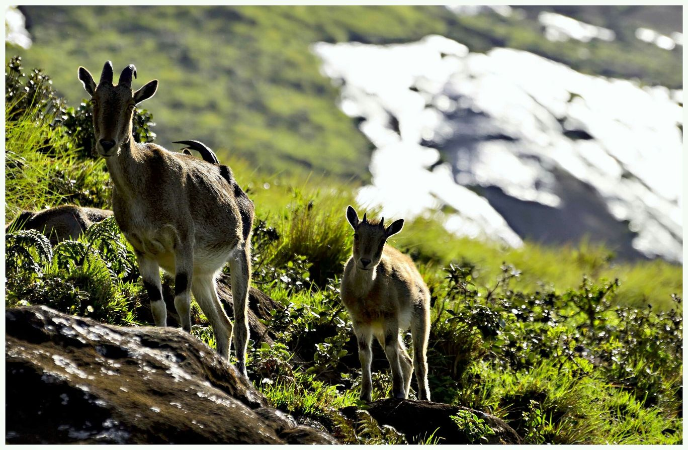 Photo of Eravikulam National Park By tra-lover