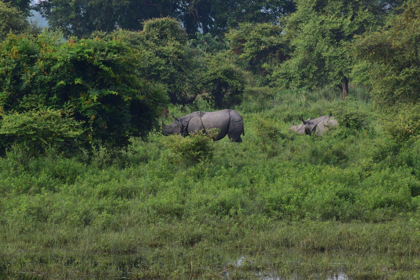 Photo of Kaziranga National Park By SUBIN K S