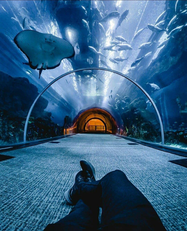 Photo of The Dubai Mall - Dubai - United Arab Emirates By Sandeep Soni