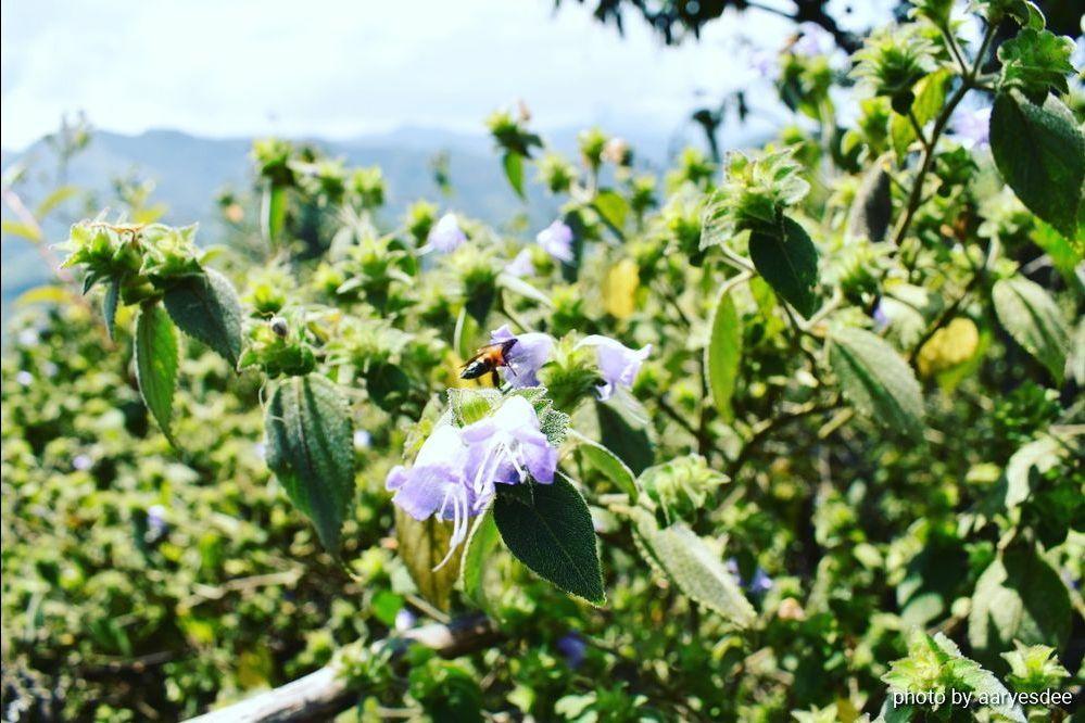 Photo of Eravikulam National Park By aaryesdee