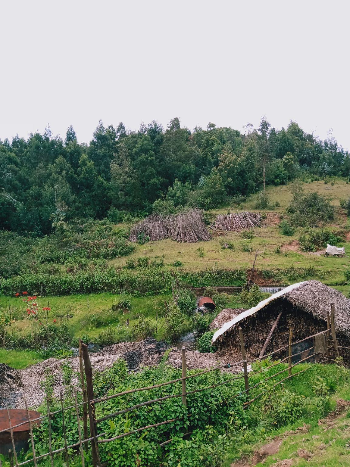 Photo of Kodaikanal By Prince Rjs