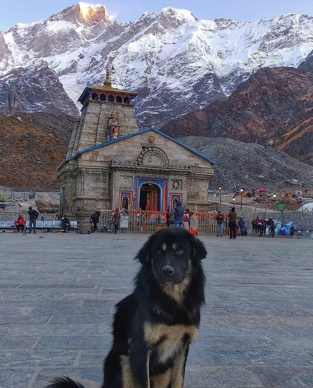 Photo of Kedarnath Temple By Dhruval Thakor