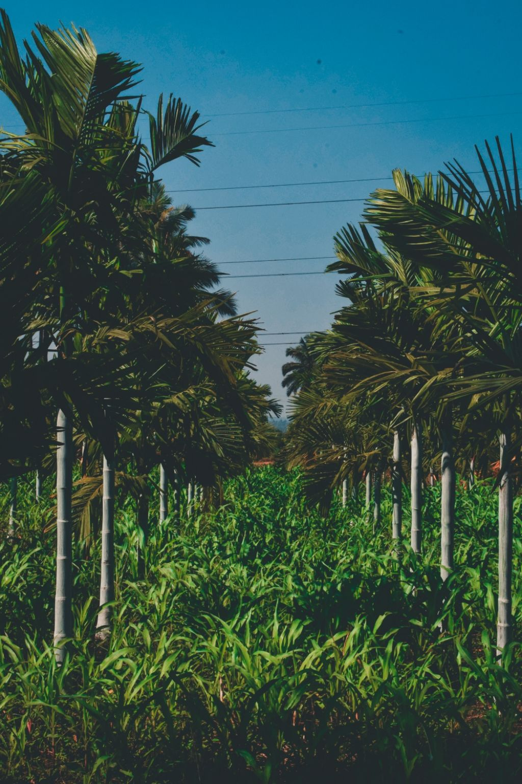 Photo of Karekura By Vishwas B