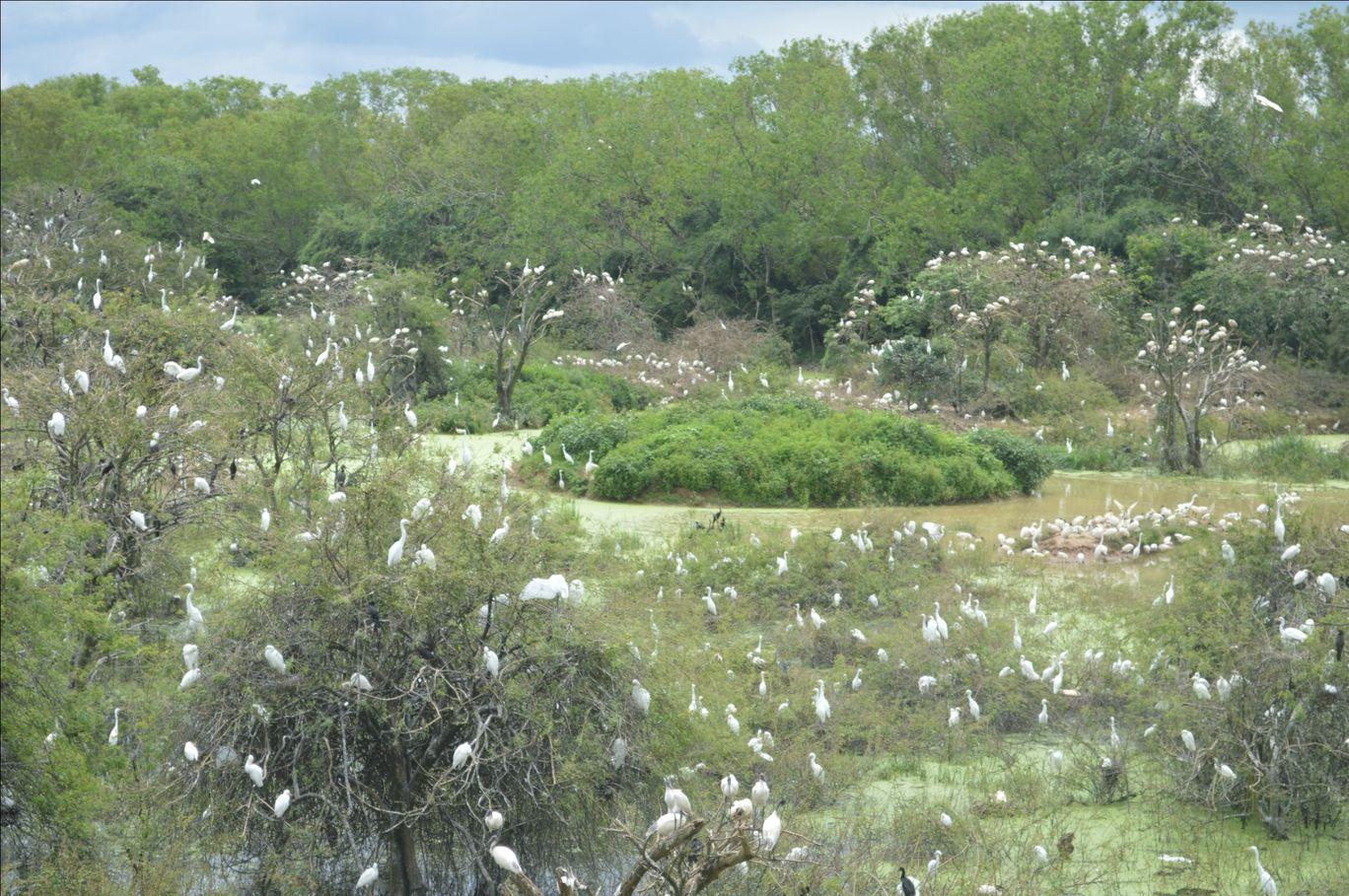 Photo of Gudavi Bird Sanctuary By Anees Anavatti
