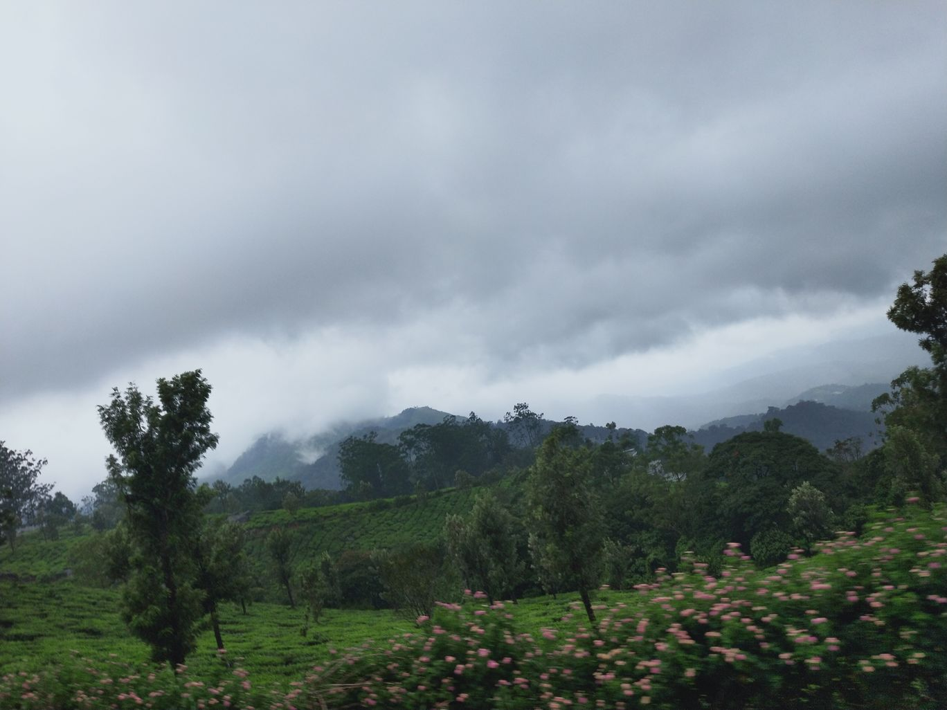 Photo of Munnar By Mounisha chowdary
