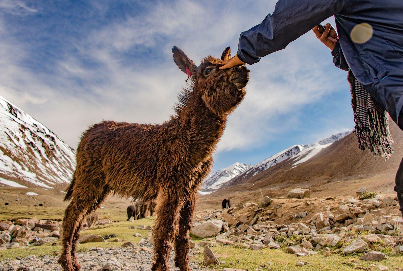 Photo of Ladakh By Ayushi Gunjyal