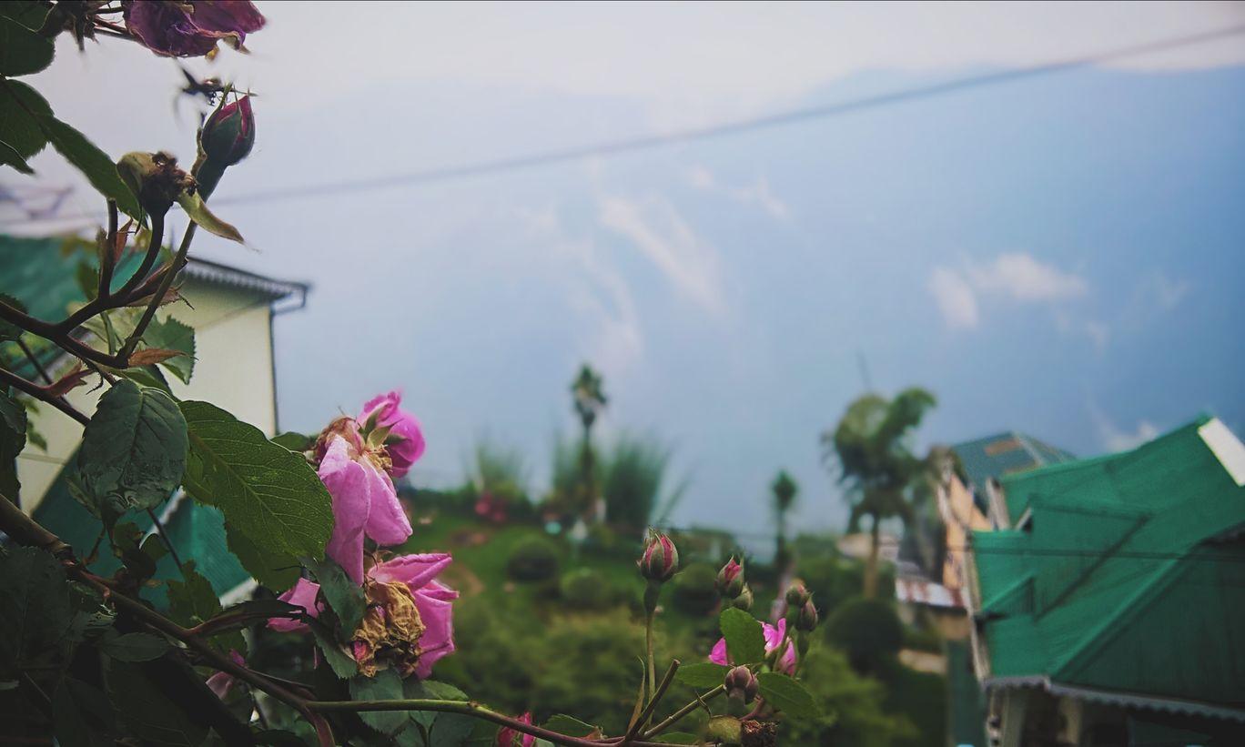 Photo of Darjeeling By Lio Mitra