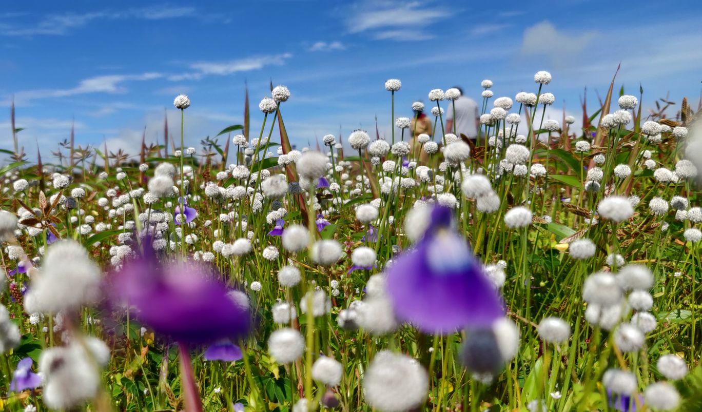 Photo of Kaas Plateau of Flowers By shaunakprasad