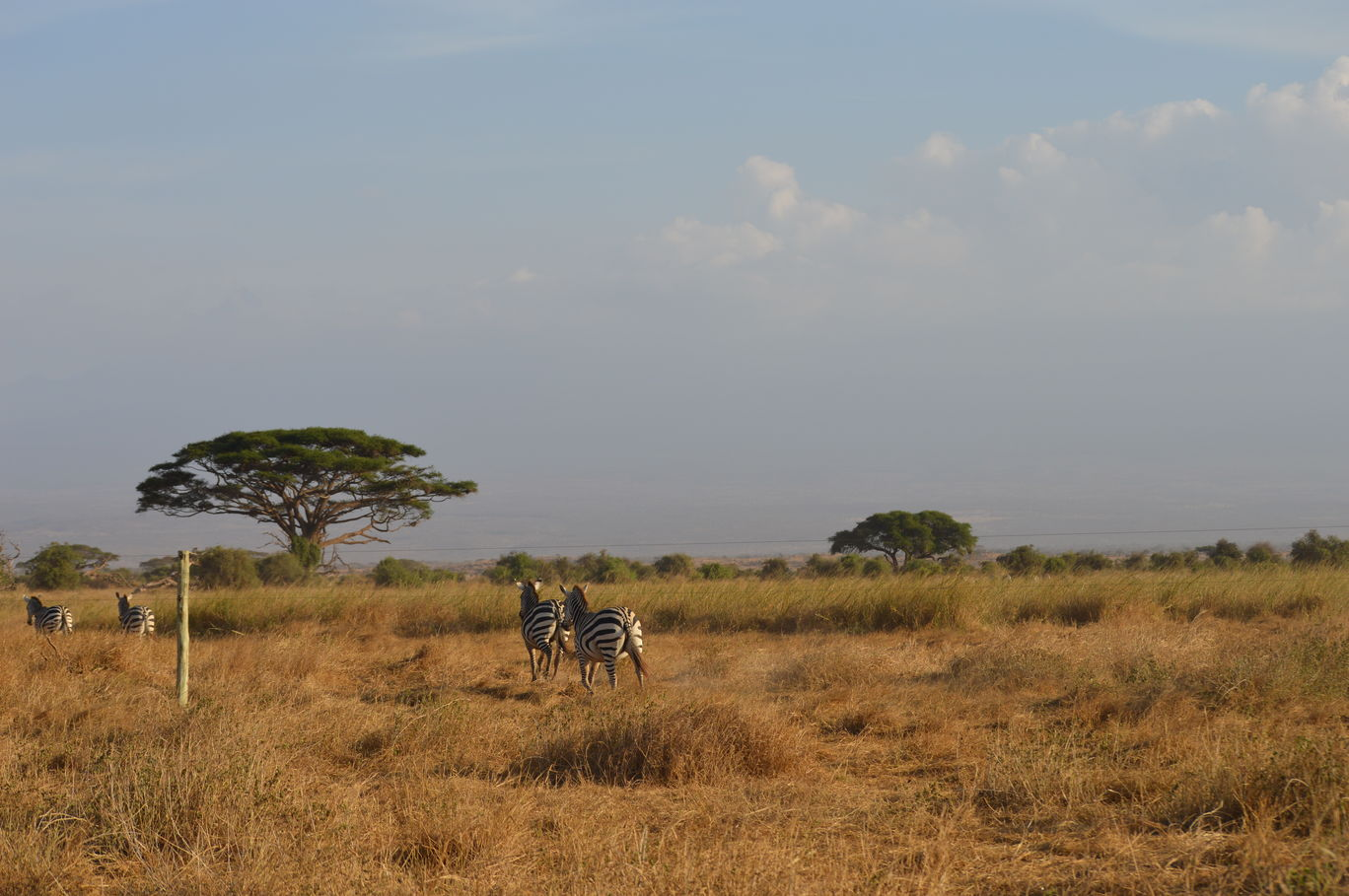 Photo of Amboseli National Park By Tulip Vacations