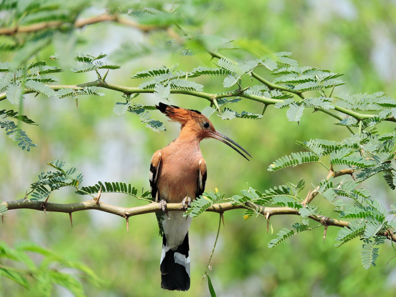 Photo of Bhigwan Bird Sanctuary By Kavitha Ananthan