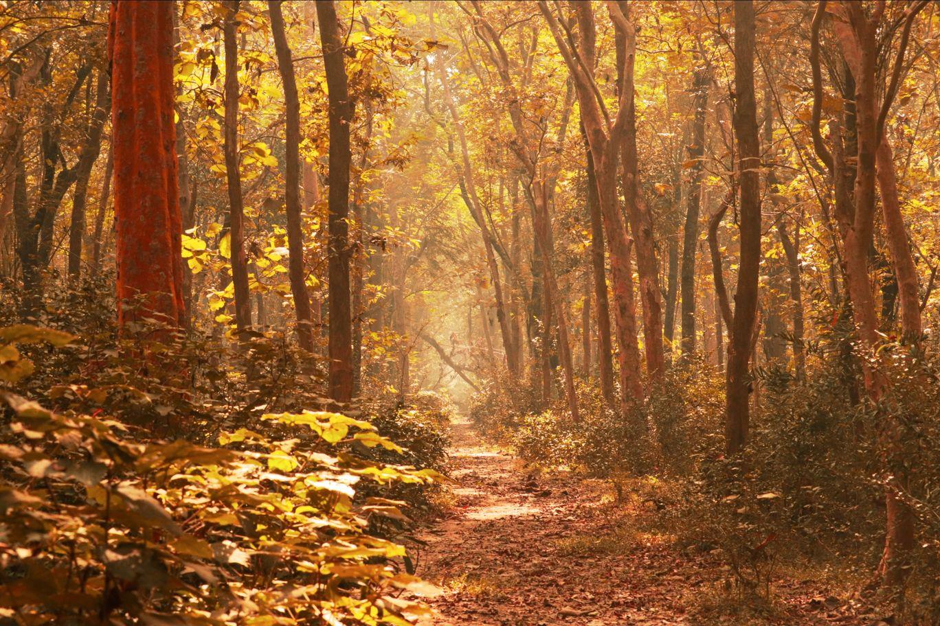 Photo of Khisma Forest By Ranabir