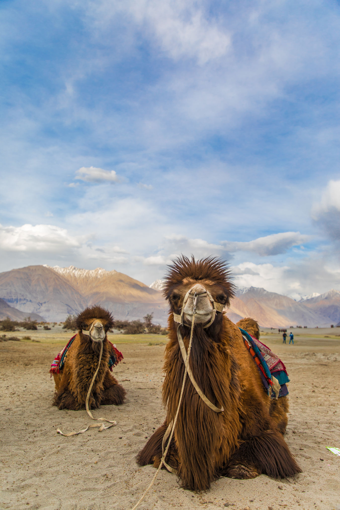 Photo of Nubra Valley By Ankit Purwar