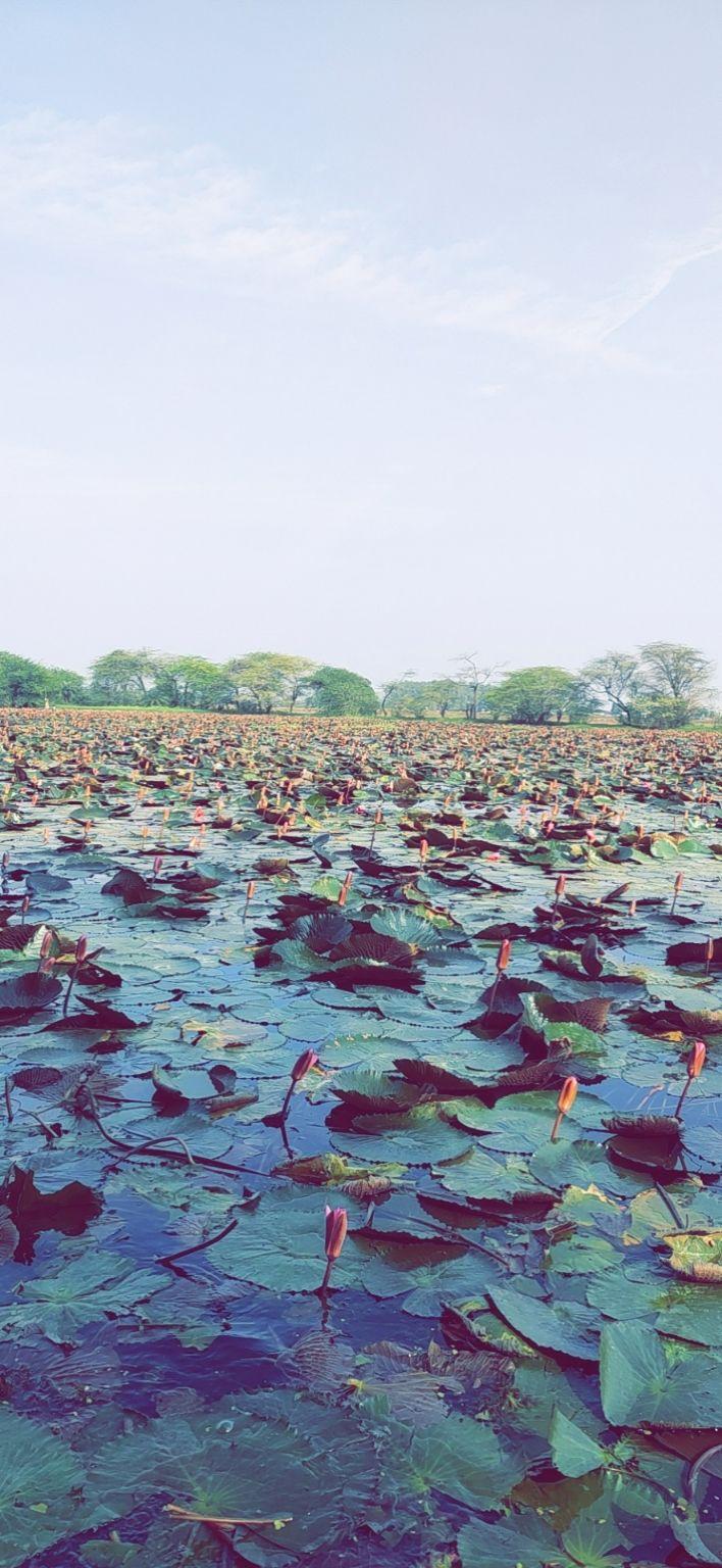 Photo of Lotus Valley Gulawat Indore By Geetam Joshi