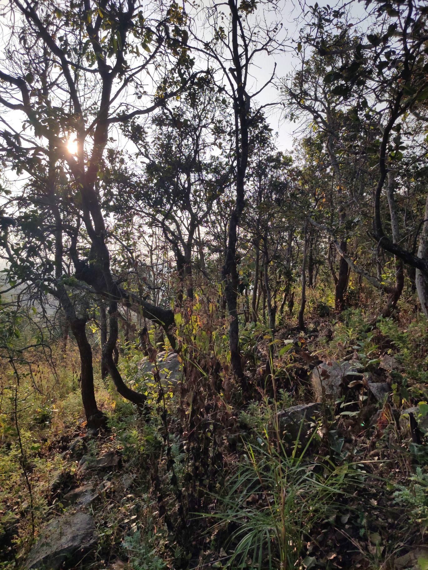 Photo of Channagiri Hills Trek Start Point By meghal Sharma