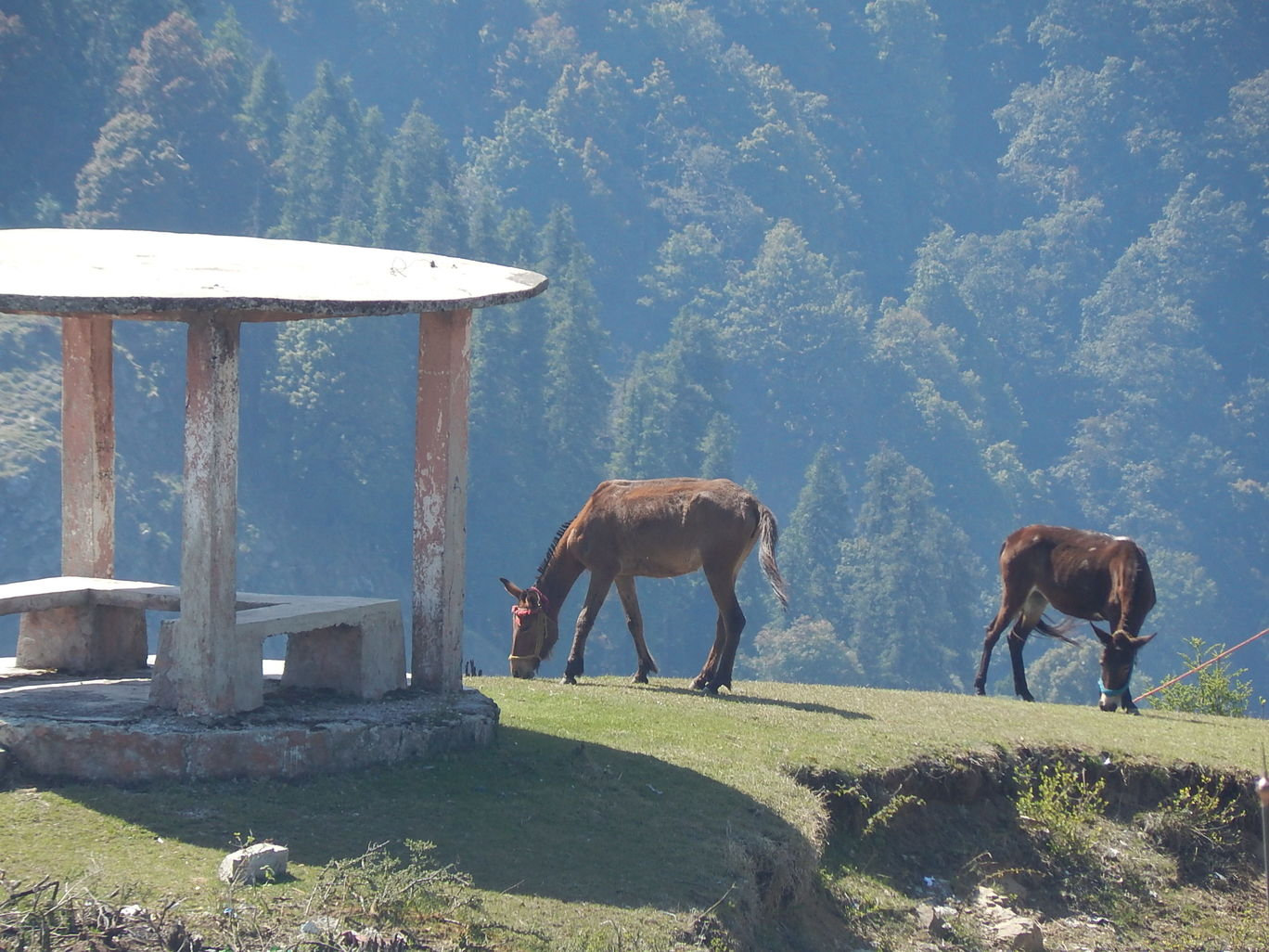 Photo of Kanatal – A quaint hamlet By Raunak Upadhyay
