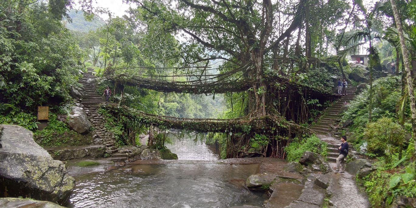 Photo of Double Decker Living Root Bridge By Himanshu Sonber