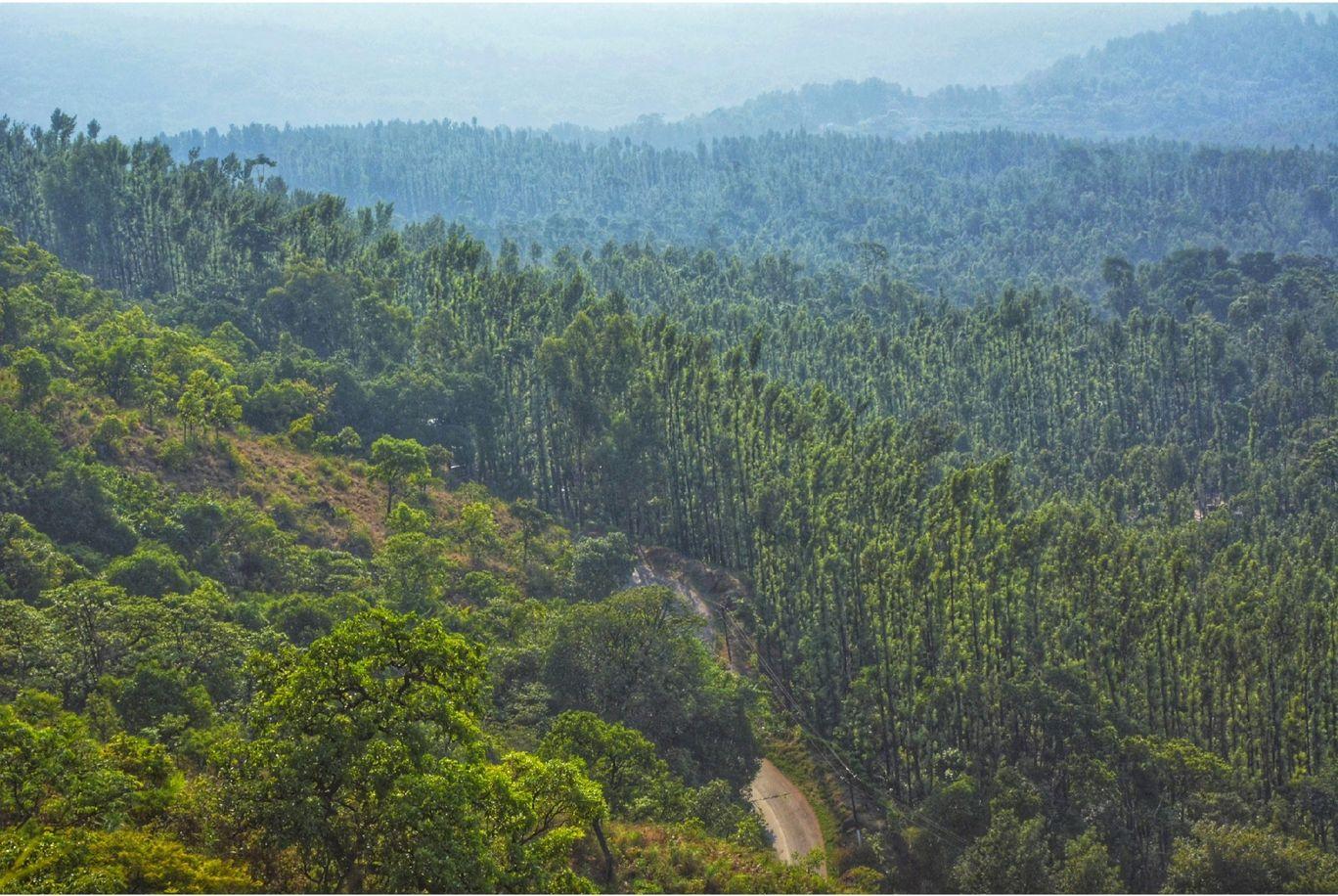 Photo of Mullayanagiri By Ramadevi Reddy
