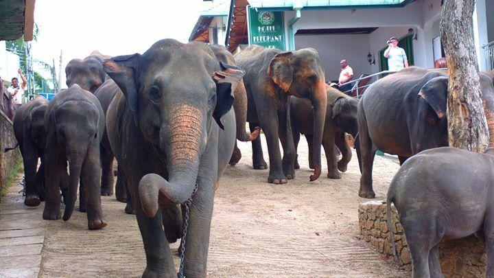 Photo of Pinnawala Elephant Orphanage By Chendilk