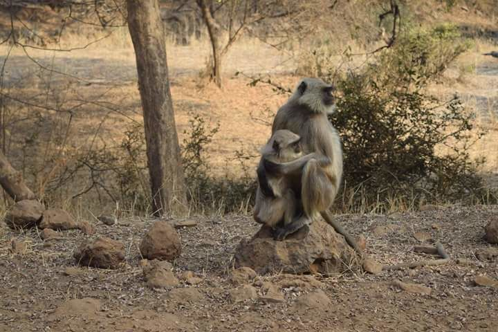 Photo of Sariska Tiger Camp By Yeh Bhi India