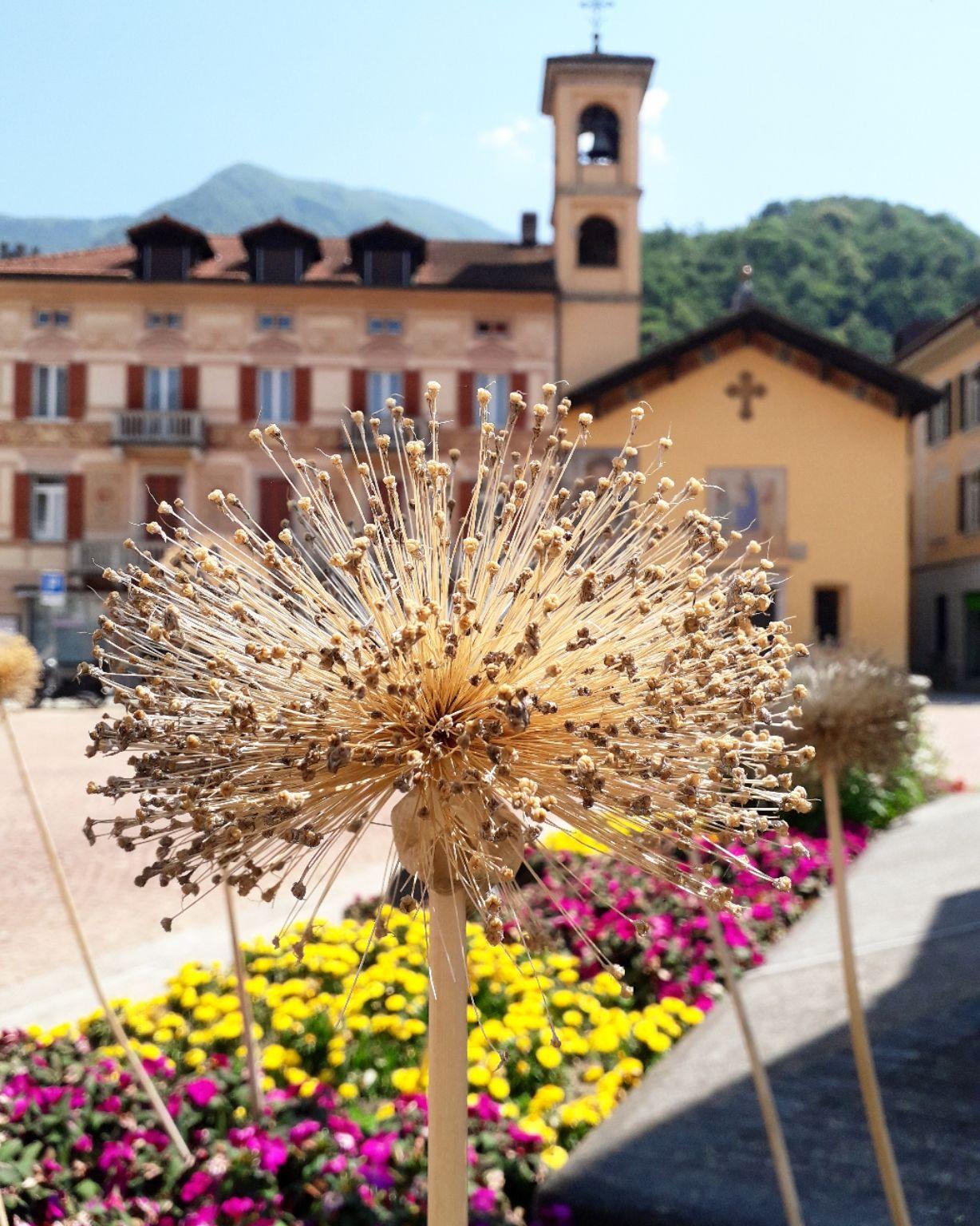 Photo of Bellinzona By Priya Saxena