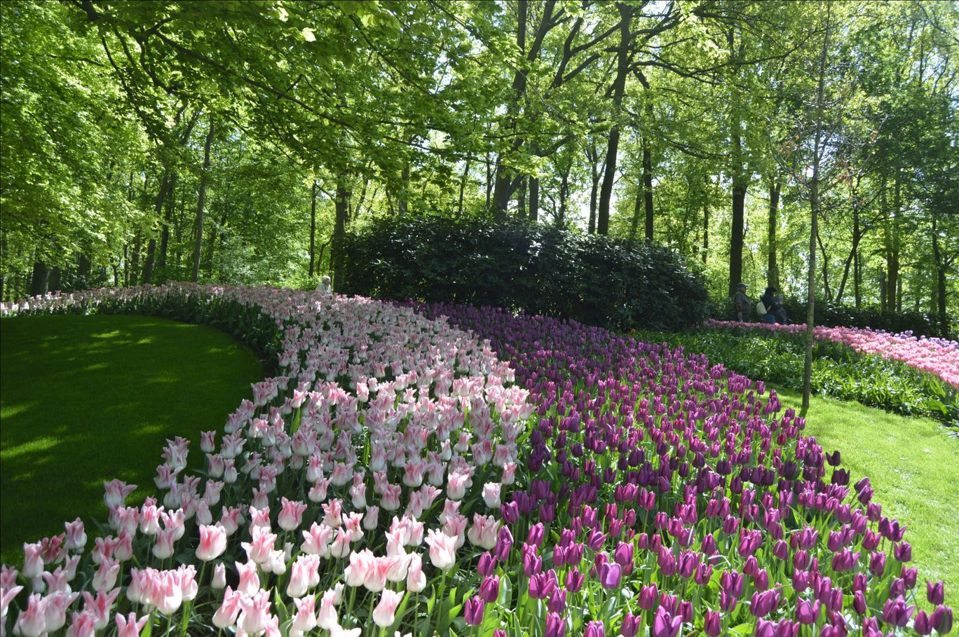 Photo of Keukenhof HOLLAND By Ninad Chitnis