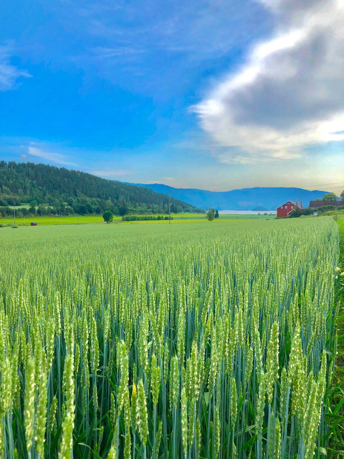 Photo of Road trip to Flåm By Shailja (Travel nerd story)