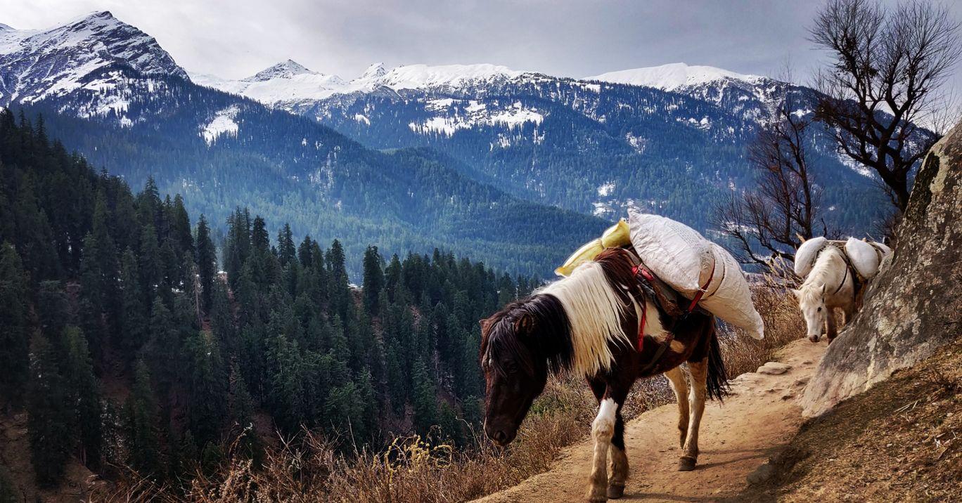 Photo of Kheerganga - Sunshine Himalayan Camp By Siva Prakash Rayachoti