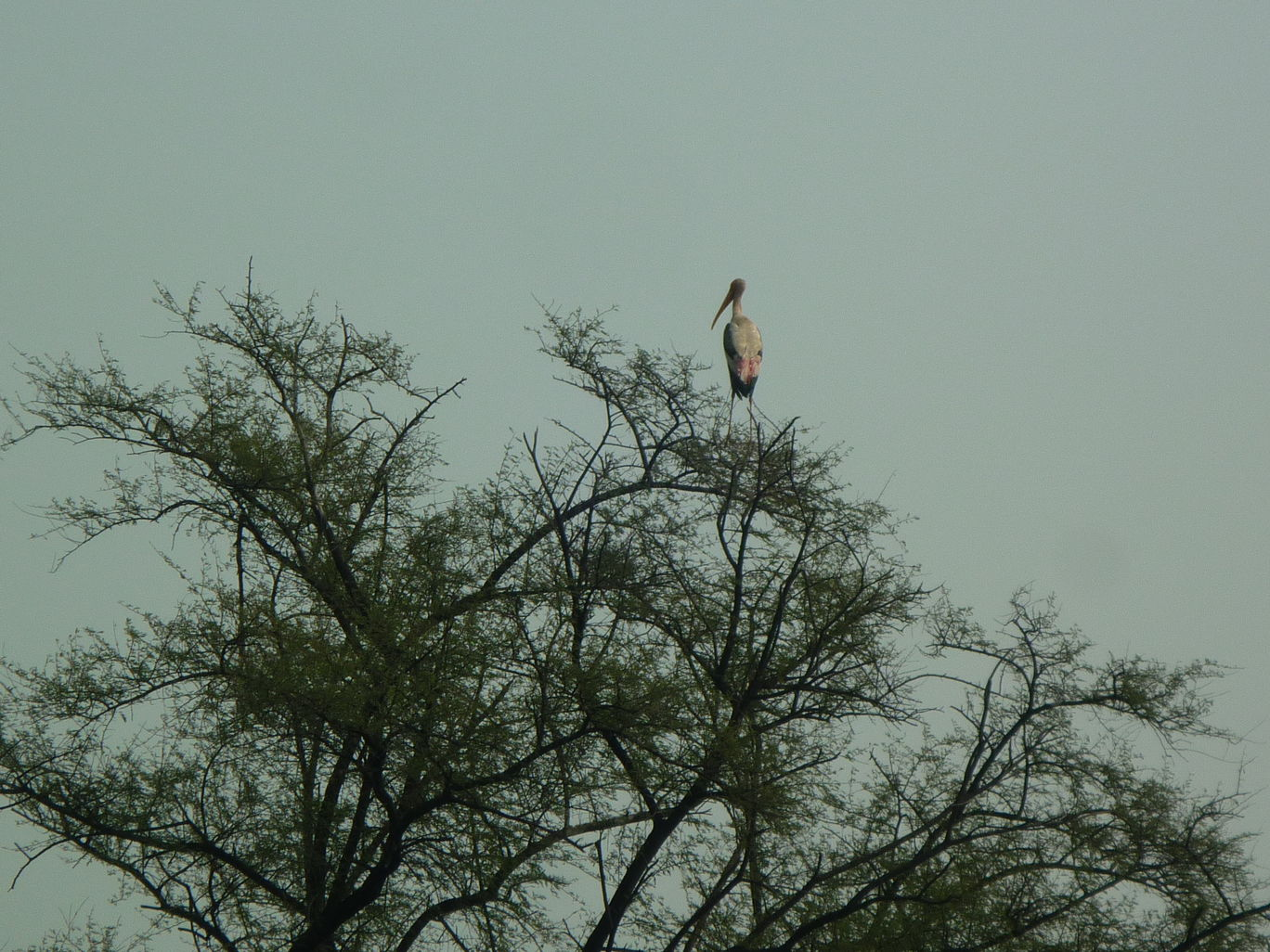 Photo of Bharatpur Bird Sanctuary By Rituparna Patgiri