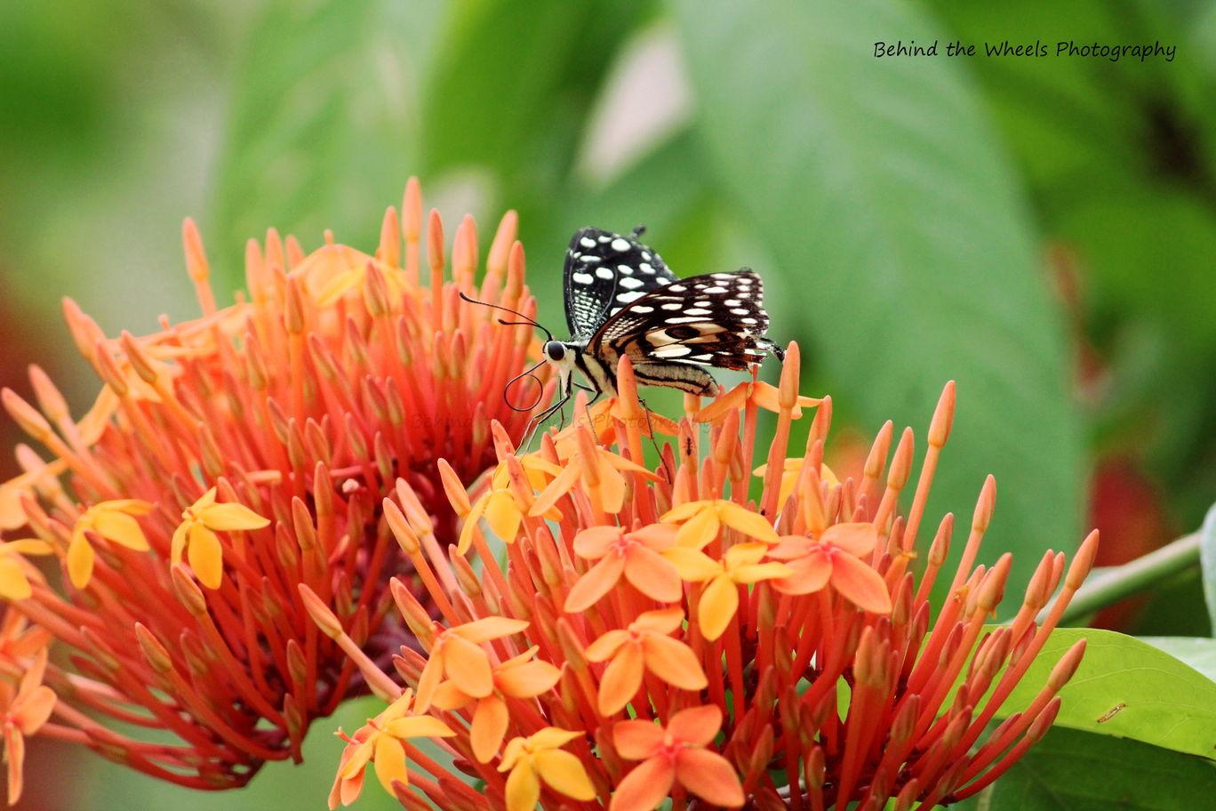 Photo of Wildlife safari at Bannerghatta National Park By Bhuvanesh Waran
