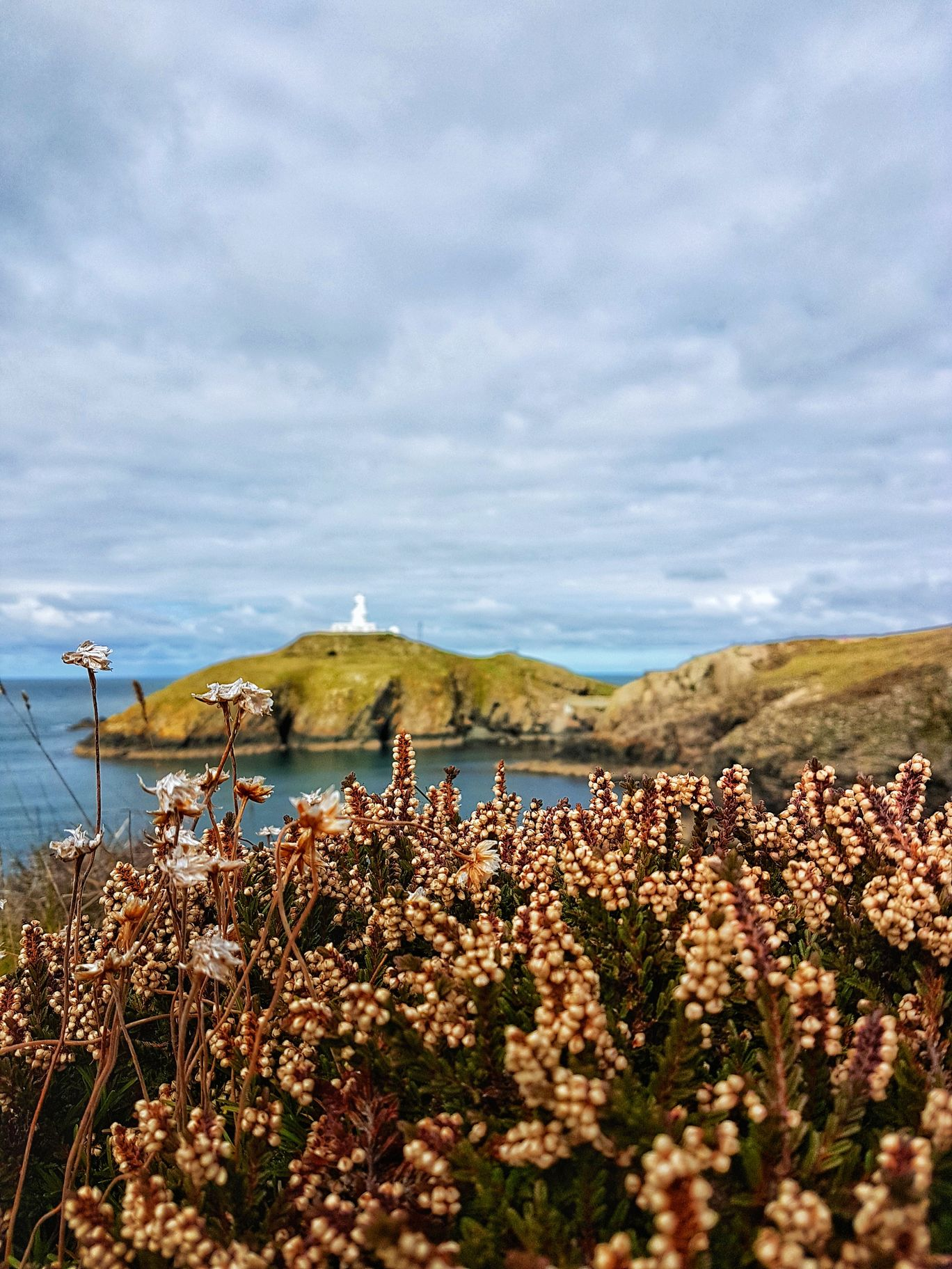 Photo of YHA Pwll Deri By Malvika Nighojkar