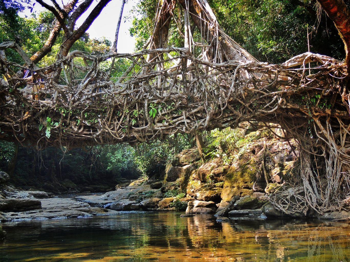 Photo of Living Root Bridge By pshrutika
