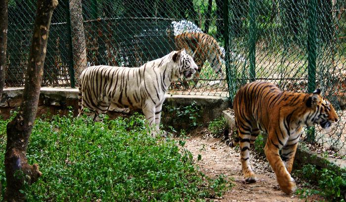 Bannerghatta National Park, Bangalore - 2020 (Photos & Reviews)