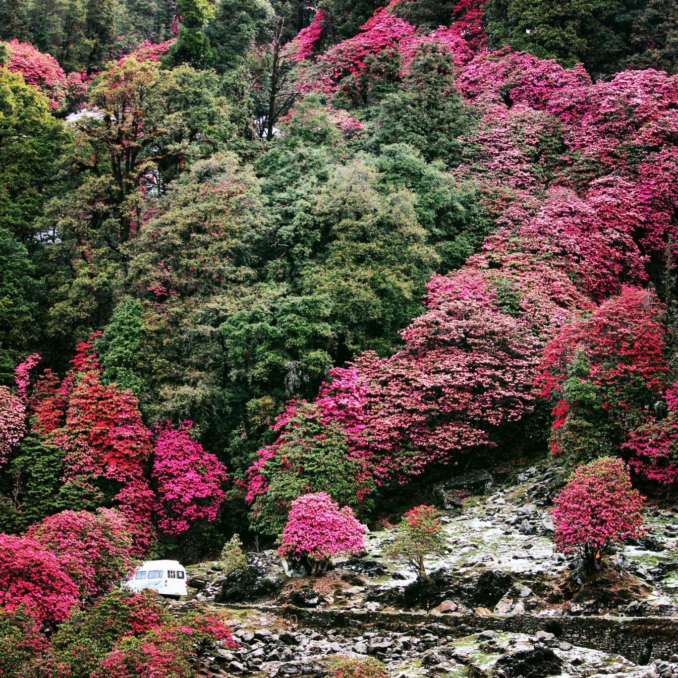 Photo of Chopta Valley By rajenikhil