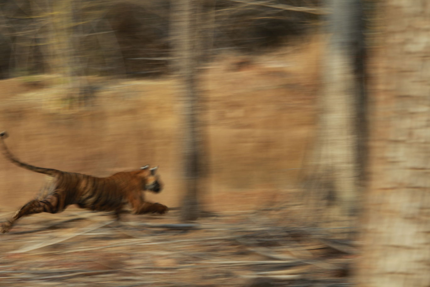 Photo of Tadoba Andhari National Park By S.AHMED T11