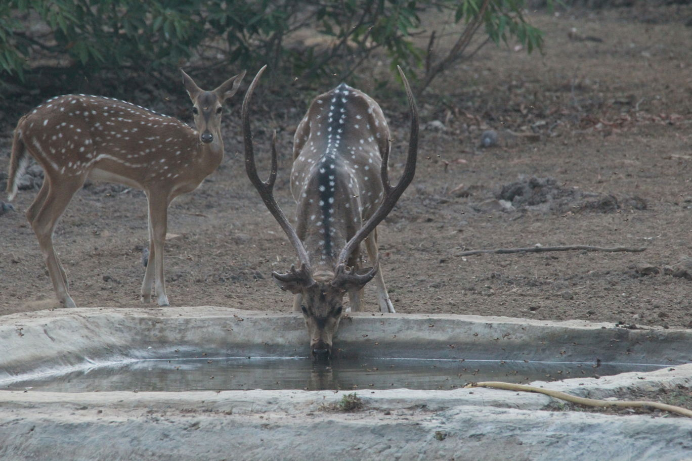 Photo of Tadoba Andhari National Park By S.AHMED T11