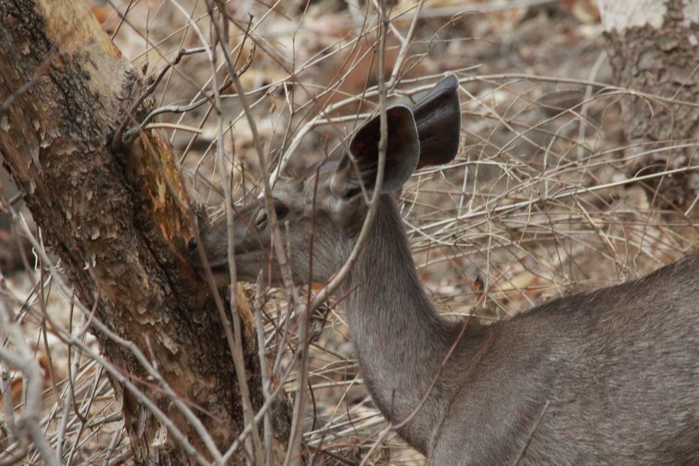 Photo of Bor Wildlife Sanctuary Interpretation Centre By S.AHMED T11