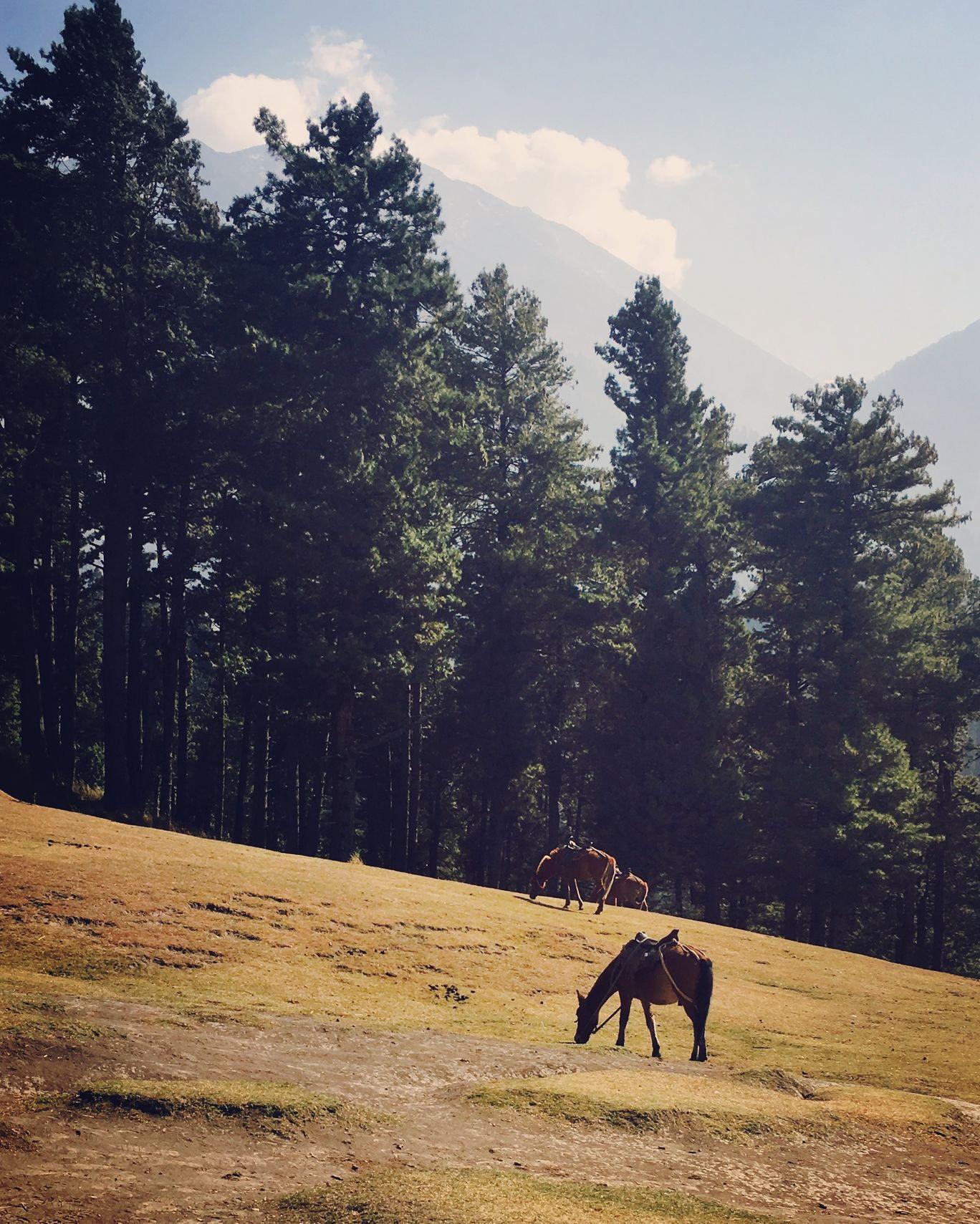 Photo of Pahalgam By Varsha Parwani